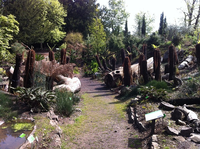 The Evolutionary dell at Bristol Botanic gardens