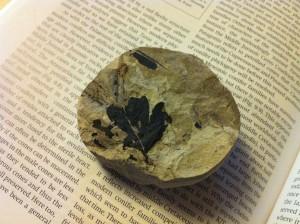 Ginkgo Fossil