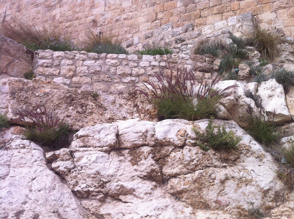 the walls of Jerusalem are full of wildflowers