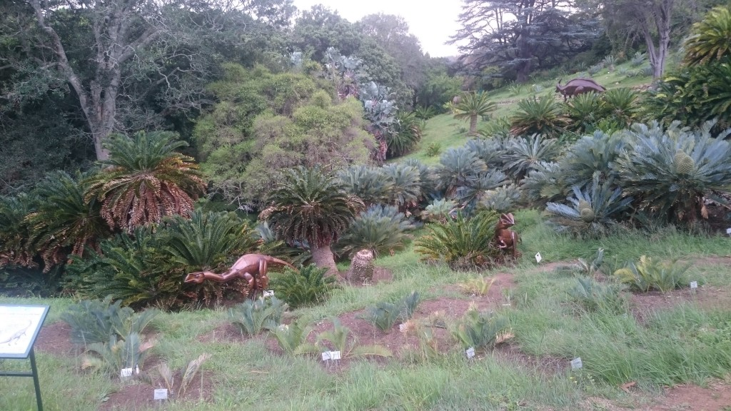 An exhibition of full sized metal dinosaurs amongst the cycad grove. Some of these plants were centuaries old and are some of the most endangered living things on earth.
