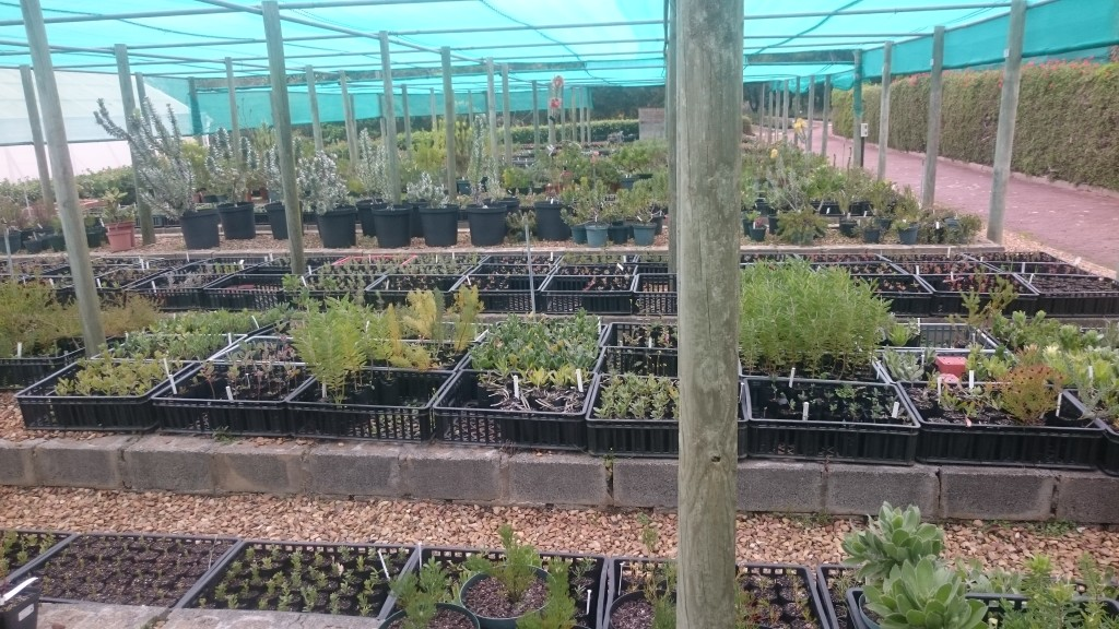 Behind the scenes in the Protea propagation centre