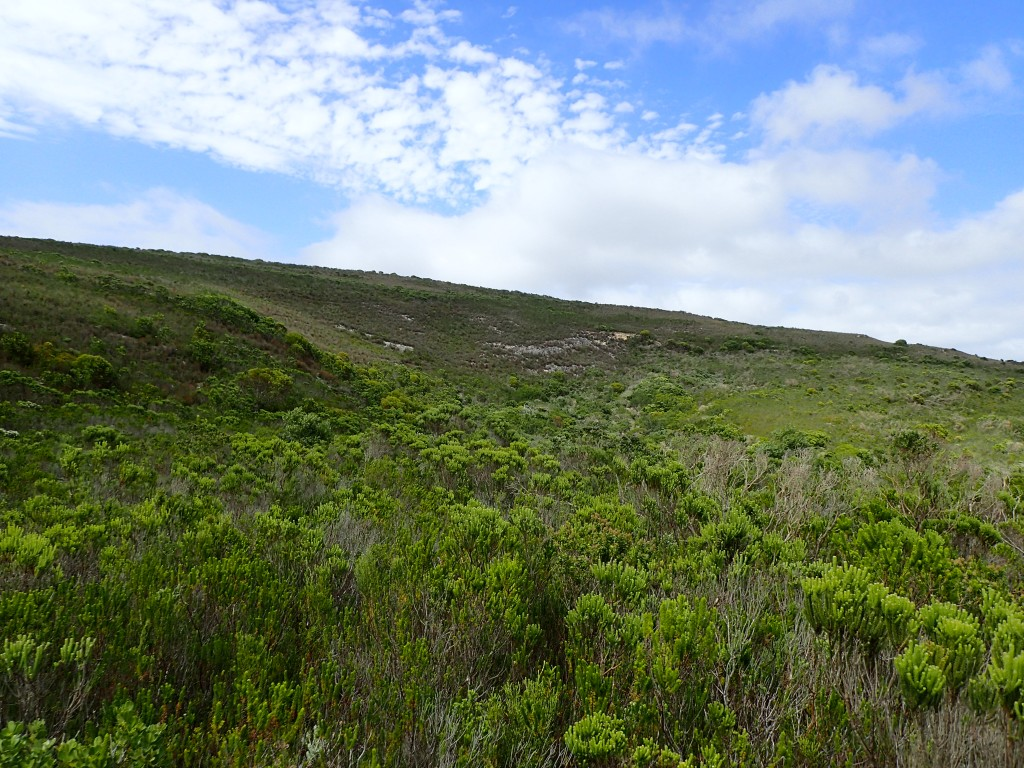The vivid green of Agulas limestone fynbos